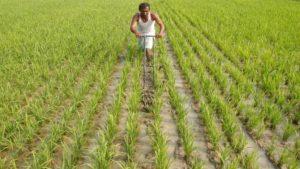 Govt hikes MSP of Kharif crops for 2019-20 season_50.1