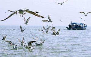 "Odisha approves conservation plan of lakes ""Chilika and Ansupa""_50.1"