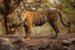 Chattisgarh declares Guru Ghasidas National Park as tiger reserve_50.1