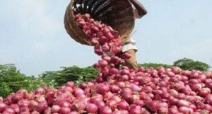MMTC to import 11000 MT of Onions from Turkey_50.1