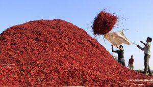 Madhya Pradesh: Chilli Festival begins in Khargone district_50.1