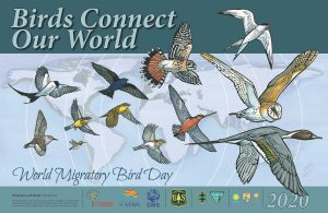 World Migratory Bird Day observed globally on 9 May_50.1