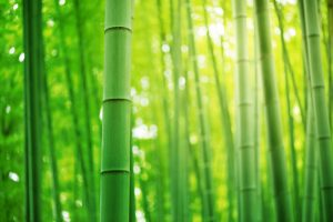 GoI increases customs duty on bamboo from 10% to 25%_50.1