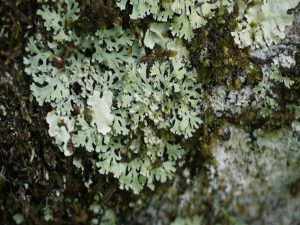 U'khand forest department develops India's 1st lichen park_50.1