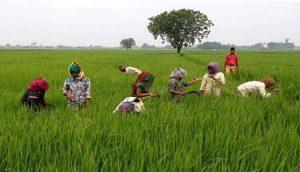 Odisha Govt launches 'Balaram Yojana' to provide crop loan_50.1