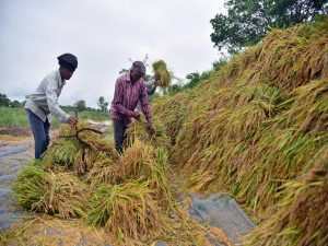 Goa Govt ties up with India Post to get farmers enrolled in PM-KISAN scheme_50.1
