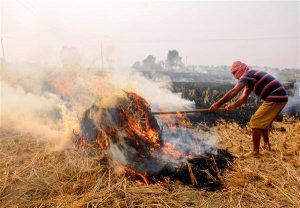 SC appoints former judge to monitor steps to prevent stubble burning_50.1