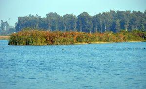 Asan Conservation Reserve becomes Uttarakhand's 1st Ramsar site_50.1